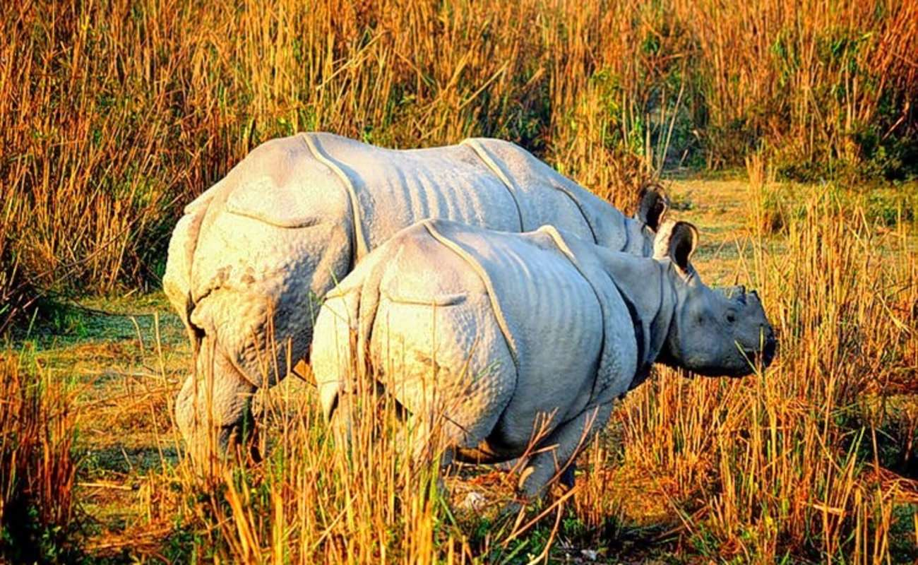 Kaziranga Shillong 5 Nights 6 Days (DELUXE)(Flight or Train Ticket not included)