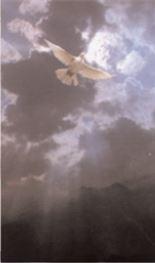 Storm Dove