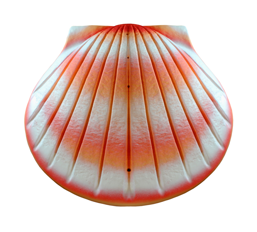 Shell, Coral  325.00 16 L x 16 W x 6.25 H 400 Cubic Inches