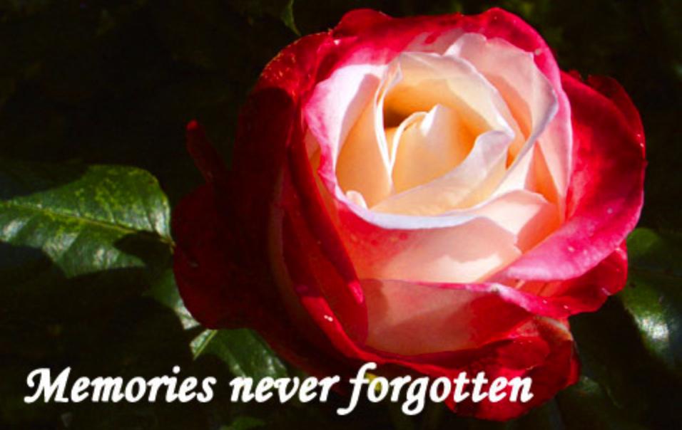 Memories Never Forgotten