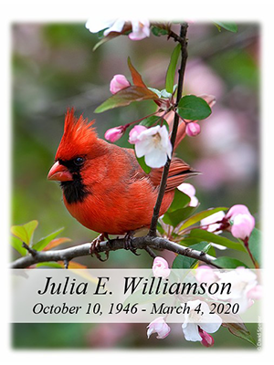 Cardinal - Spring no photo