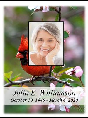 Cardinal - Spring w-photo