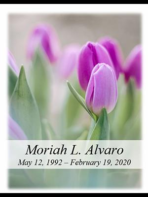 Tulip no photo