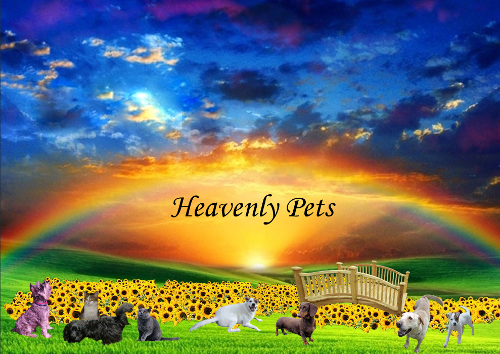 Heavenly Pets, Our New Pet Garden