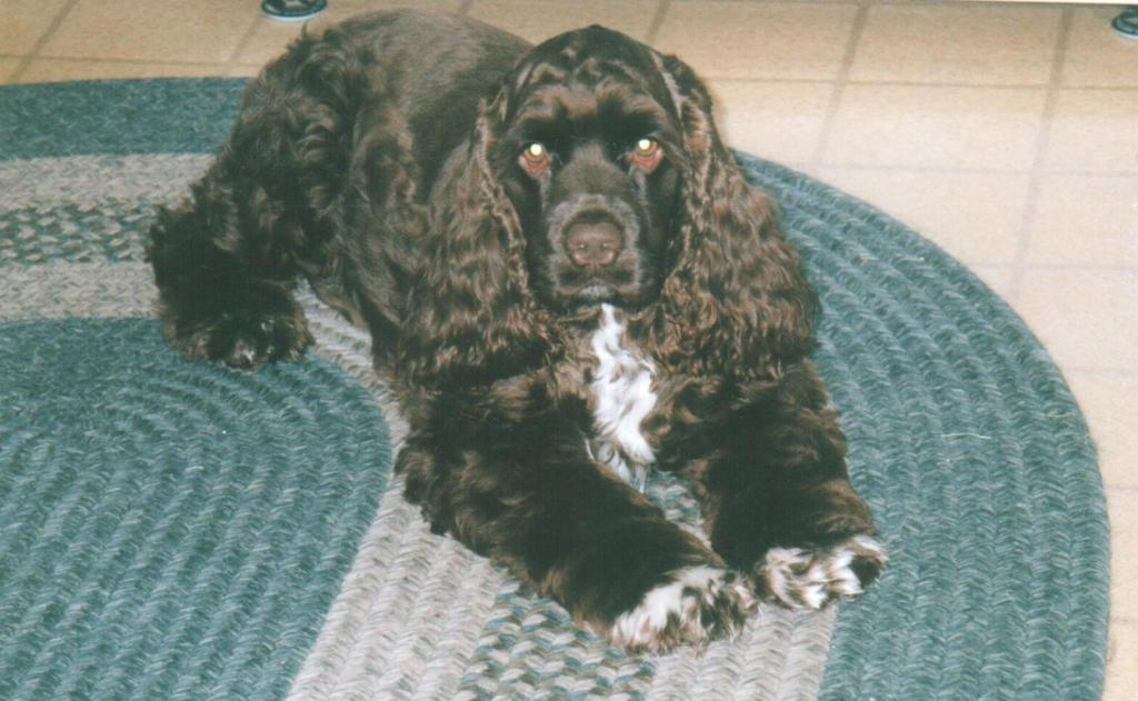 Boo, whose human was Shelby, passed away in 2019. Boo was born on January 3, 2008.