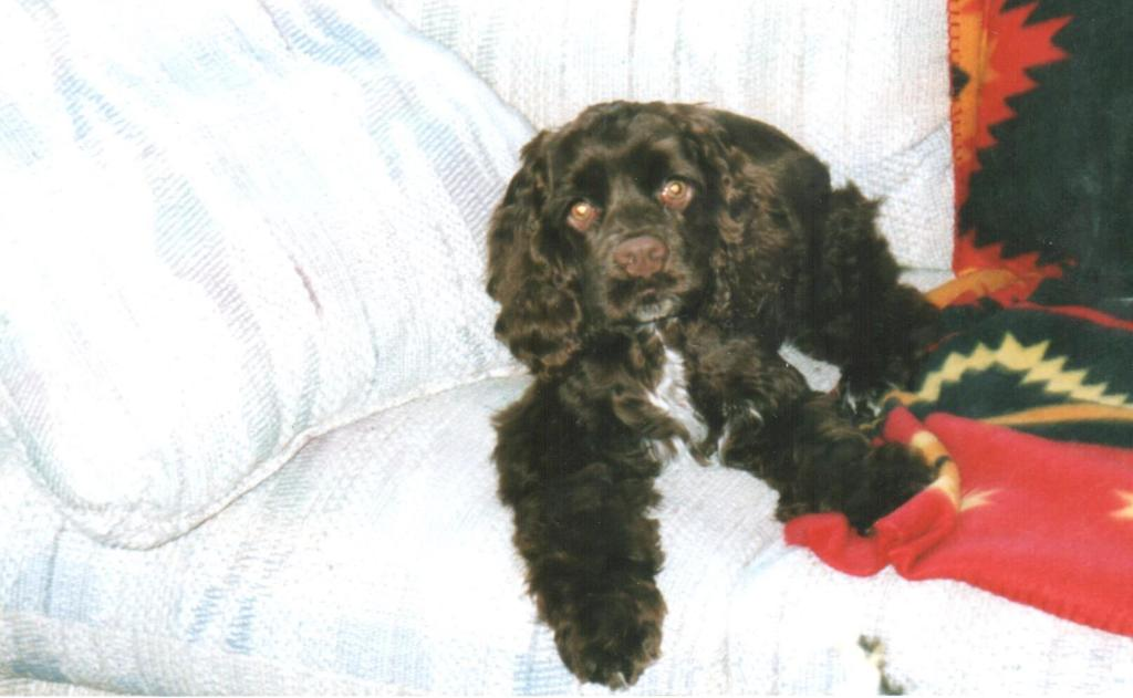 Coco, whose human was Shelby, passed away in 2019. Coco was born November 25, 2007.