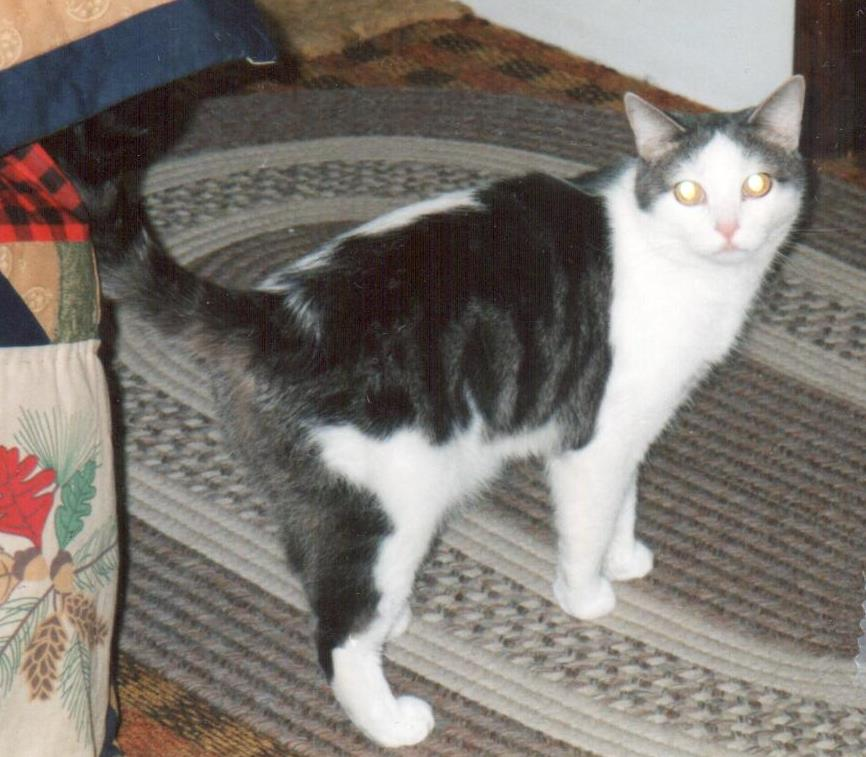 Sylvester, whose human was Shelby, passed away in 2018. Sylvester was born on June 17, 1996.