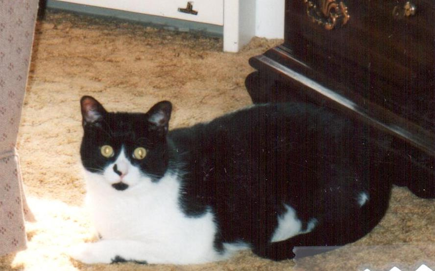 Speedy, whose human was Shelby, passed away in 2019. Speedy was born on September 3, 1999.