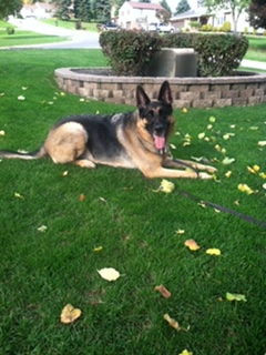 The German Shepherd named Fifty. Fifty was born in June of 2009 and passed away in August of 2020.
