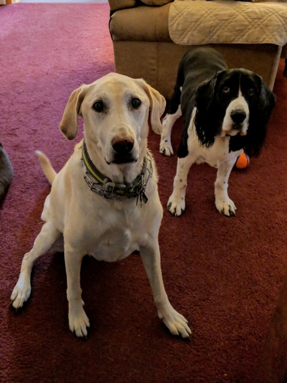Tank and Bandit who are missed by their humans, Bob, Kelly and Ryan. Tank passed away on 12/21/18 and Bandit passed away on 5/26/19.