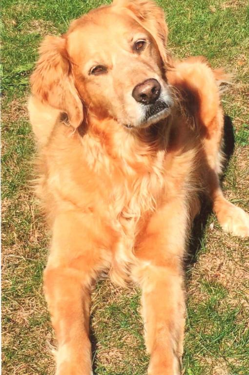 8/16/10 - 8/24/20. Our beloved Abby was given to the Lord on 8/24/20. Abby will be deeply missed by mom and dad, brother, Alex, sissys, Chloe, & Lippso, BFF's & many family.