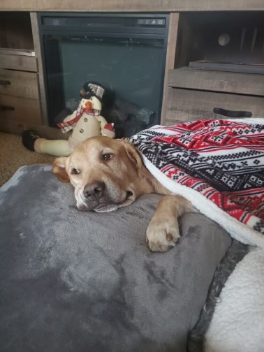 Baxter McCarthy who will be forever missed by his humans, Tracy and Jim and their family. He was born on September 13, 2015. He gained his wings on January 12, 2021