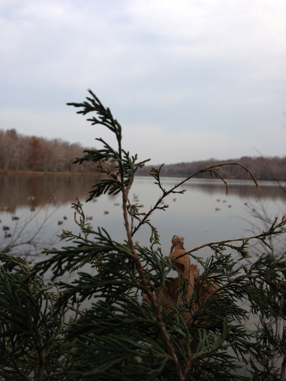 Montgomery County Beauty
