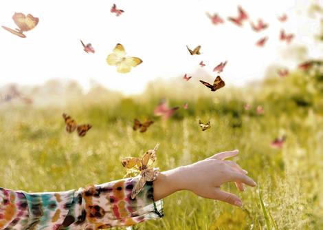 A Butterfly Release