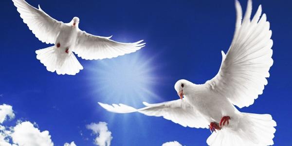 A Dove Release