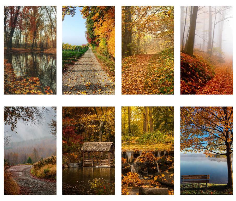 Series L - Autumn