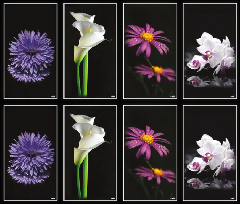Series K - Flowers on Black