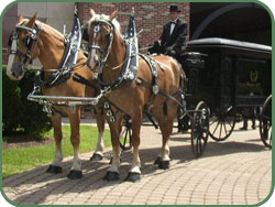 Picture here with the Belgian Draft Horses is  Co-Owner of Sunshine Acres, Raymond Theodori