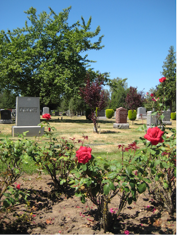 Roses border the cemetery