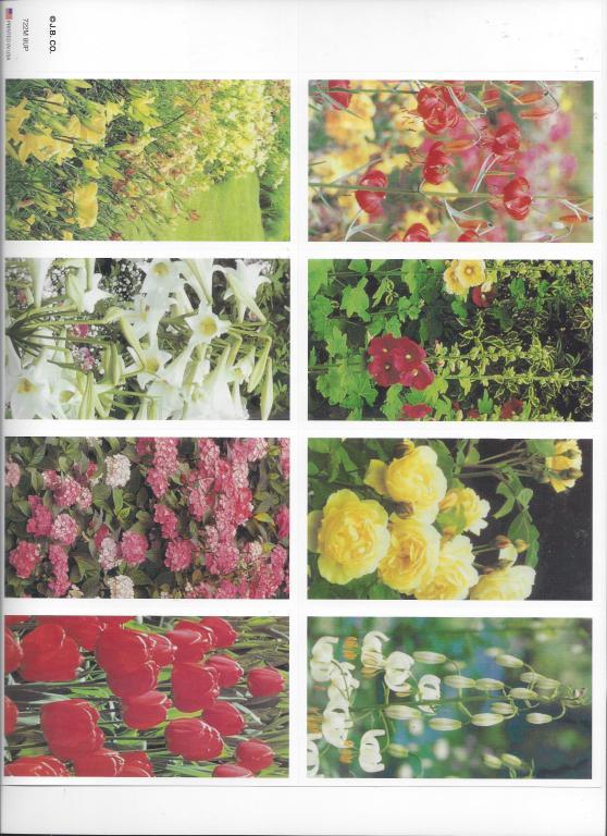 Flowers (JBCo)