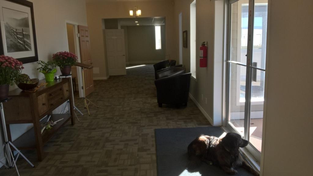 Entrance with Comfort Dog Aspen