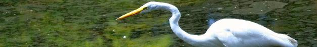 Bird-112