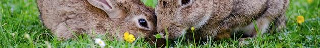Bunnies-391