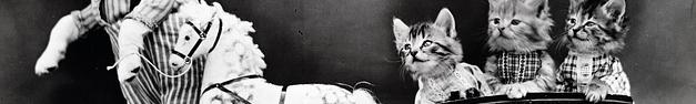 Cat-126