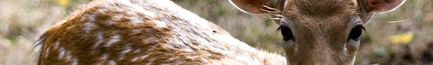 Deer-102