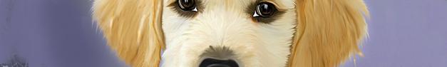 Dog-122