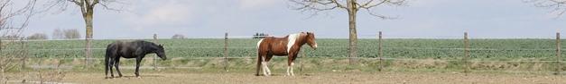 Horses-399