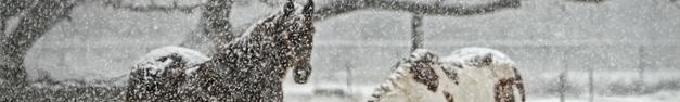 Horses-Snow-378
