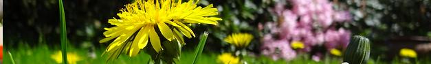 Floral-129