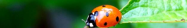 Ladybug-144