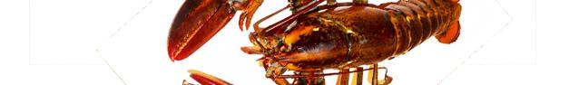 Lobster-305