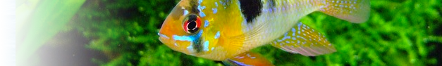 Tropical-Fish-276