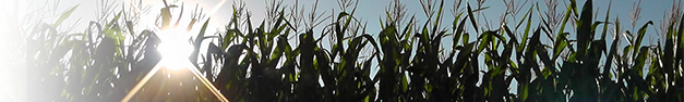 Corn-Field-340