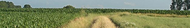 Farm-Field-346