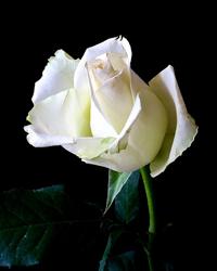 Obituary for Mary June Bunton | Kaniewski Funeral Homes, Inc