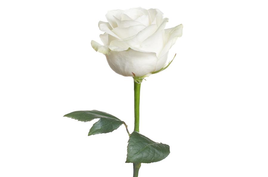 Obituary For Deborah A Blanchard Send Flowers Toomey