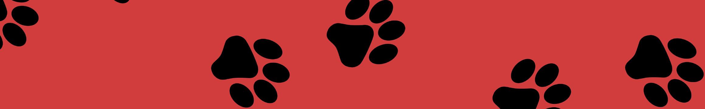 Animals Pets 11