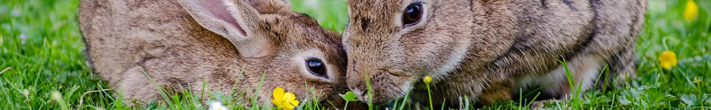 Bunny Rabbit 03