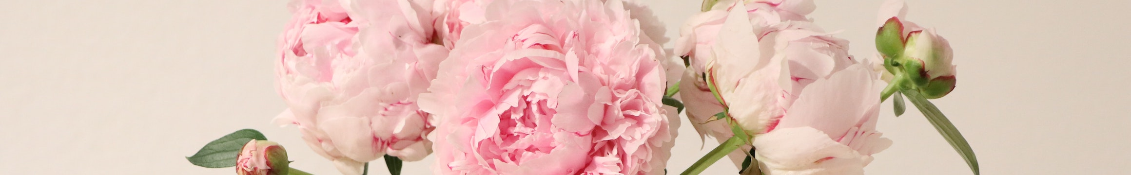 Carnations 3