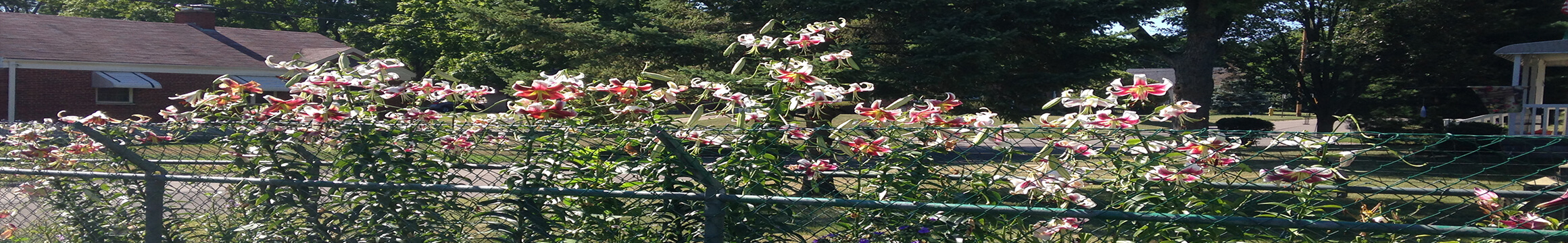 Flowers Cust
