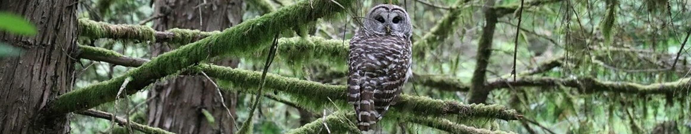 Owl0custom