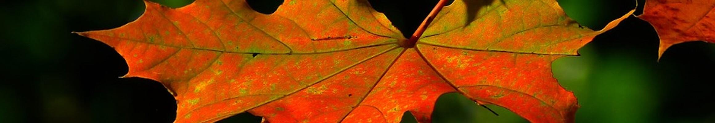 Autumn 196566 960 720