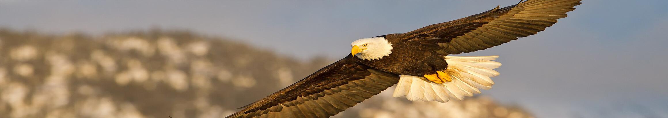 Eagle Custom