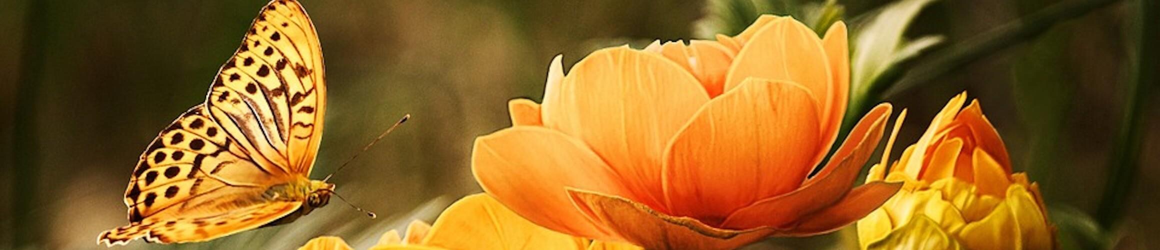 Flowers 19830 960 720