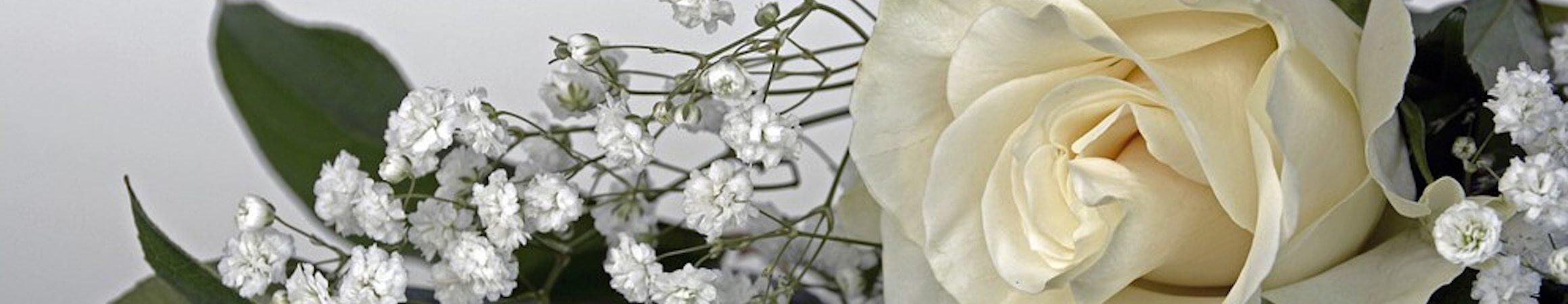 Roses 1420724  340