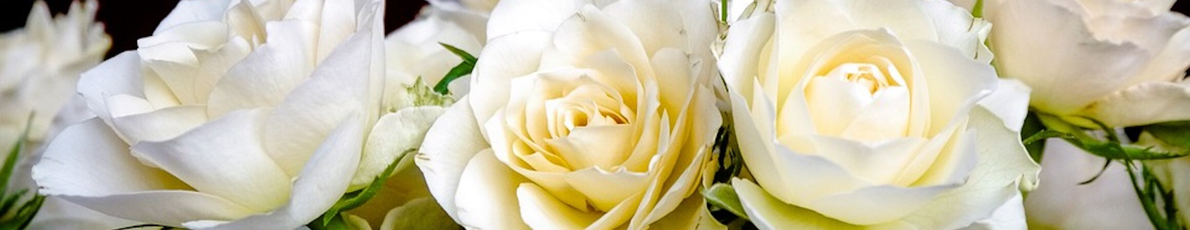 Roses 2198156 960 720